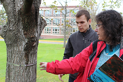 Guertin and Fridman check tree growth