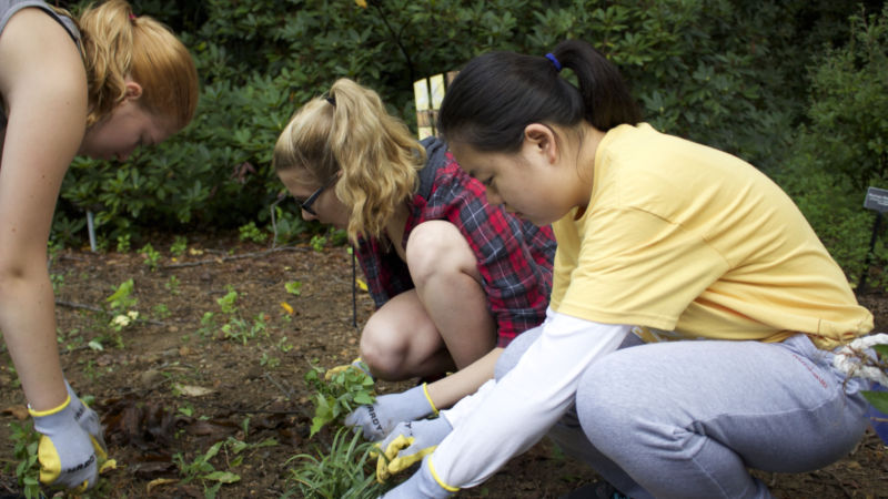Students pulling weeds at Tyler Arboretum.
